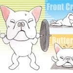 犬のトレーニング