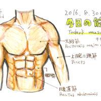 今日の筋肉[上半身筋肉図]